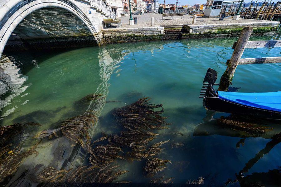 Les eaux de Venise sont redevenues limpides