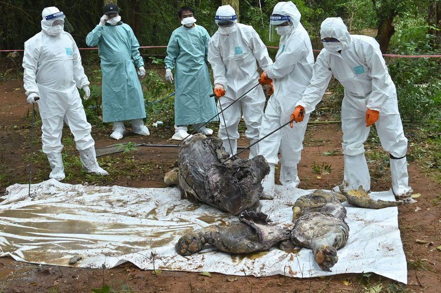 Le 20 septembre, les vétérinaires ont découvert des tigres morts et des carcasses dans des bidons d'eau.