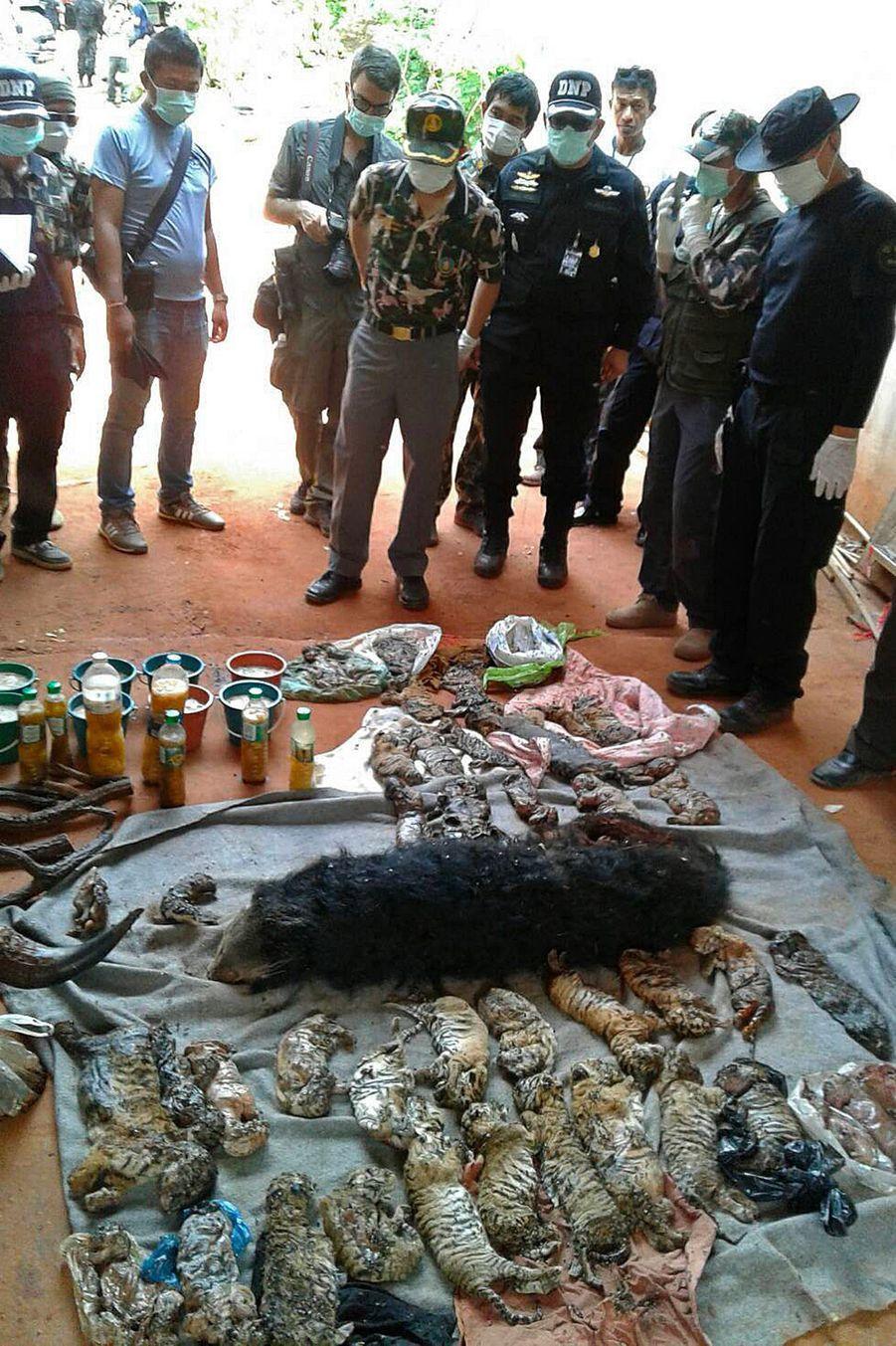 En 2016, des dizaines de bébés tigres morts avaient été retrouvés dans des congélateurs du temple Wat Pha Luang Ta Bua, probablement pour être revendus.