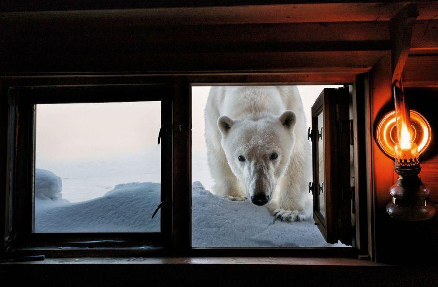Paul Nicklen raconte ce face-à-face : « Pendant que j'attendais une tempête de neige, cet ours est apparu à la fenêtre de ma cabine au Spitzberg. J'ai ouvert… et affiché un large sourire de reconnaissance ! »Pour plus d'information sur la fondation SeaLegacy et la disponibilité des œuvres photographiques, contactezzoe@sealegacy.org