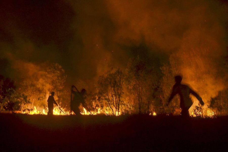 En 2019, les incendies en Indonésie ont détruit 135 000 hectares de forêts en six mois.