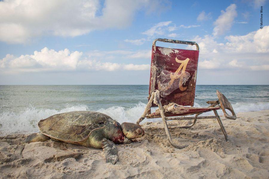 Echoués sur la plage.De loin, la plage Bon Secour d'Alabama, un sanctuaire pour la faune sauvage, paraissait attirante : un ciel bleu, un sable fin et une Tortue de Kemp. Mais quand Matthew s'en approcha, accompagné d'une équipe de nettoyeurs de plages, ils virent le nœud coulant mortel qui reliait l'animal au transat. Avec une longueur de 65cm, la Tortue de Kemp n'est pas seulement la plus petite des tortues marines, c'est aussi la plus menacée. En 50 ans, les activités humaines ont grandement réduit ses effectifs par la consommation de ses œufs, de sa viande et les captures accidentelles dans les filets de pêche. Aujourd'hui, malgré la protection de ses aires de ponte situées le long des côtes ouest du golfe du Mexique et l'obligation pour les chalutiers d'utiliser des filets non létaux pour les tortues, l'espèce reste menacée. Lors de ses patrouilles quotidiennes pour inventorier les pontes de tortues, Matthew pu également être témoin d'un autre danger, cause de blessures ou de noyades : la quantité impressionnante de matériel de pêche abandonné et de déchets qui finissent dans l'océan.