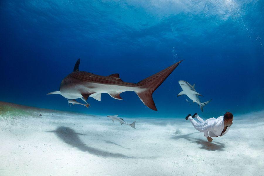 Séance photo avec les requins tigres, àGrand Bahamas.