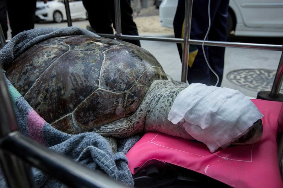 Tirelire a été tirée d'affaire. Elle avait 915 pièces dans son estomac.
