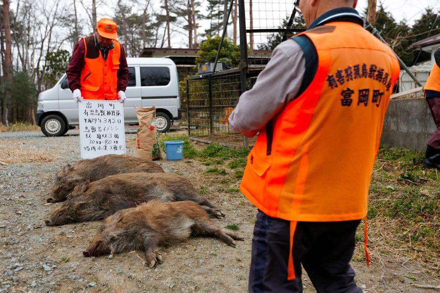 Des chasseurs deTomioka prennent des photos après avoir tué trois sangliers.