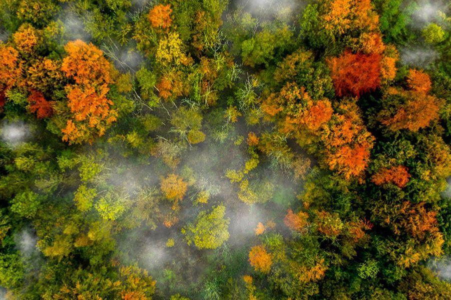 Quand le drone sublime les forêts d'automne