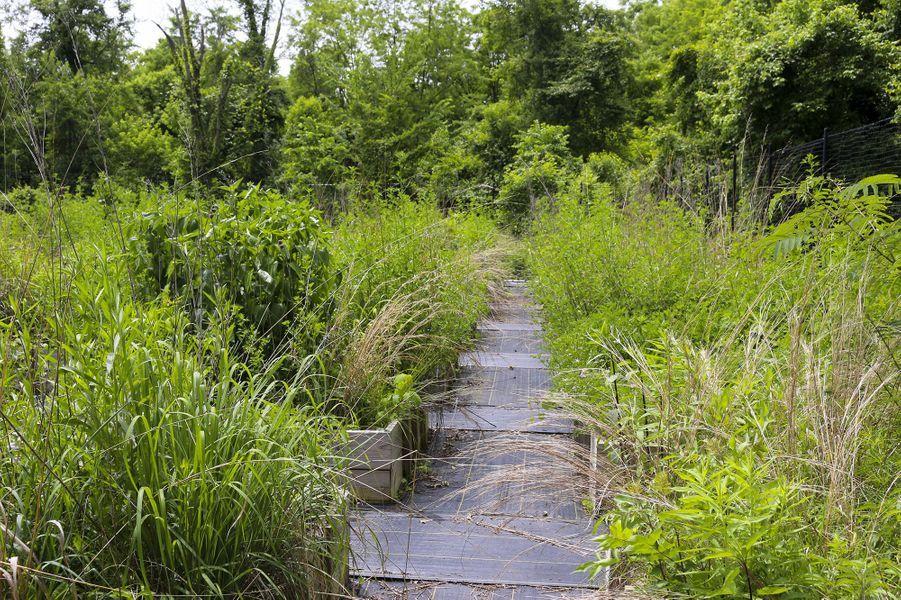 """Le """"jardin-jungle"""" du scientifique Christopher Swan à Batimore."""