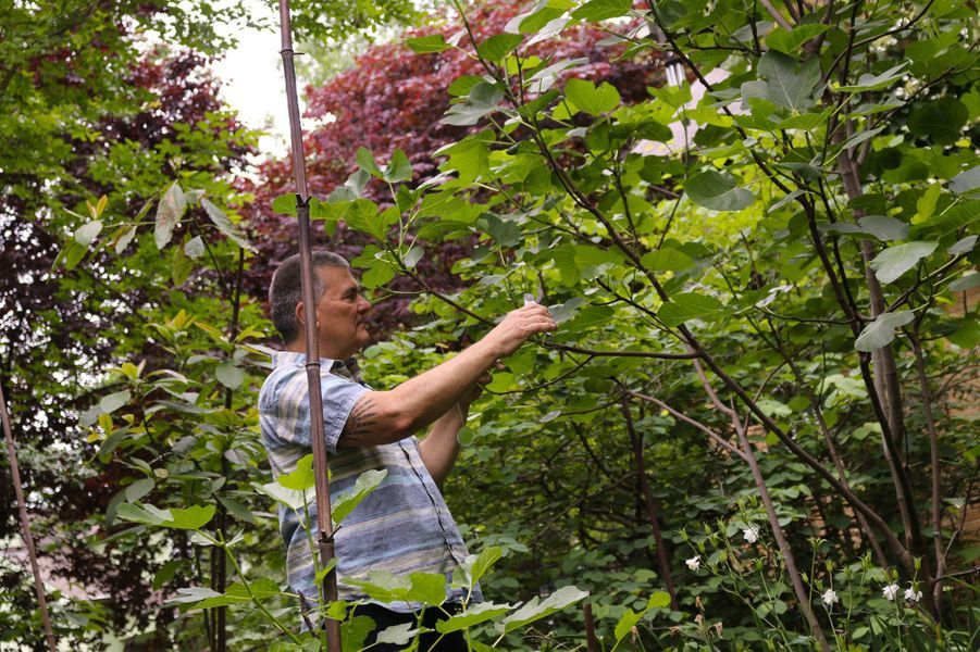 "Autre exemple de ""jardin-jungle"". Ici,Jim Nichols, àTakoma Park dans le Maryland."