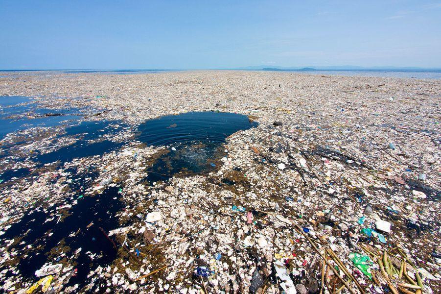 Près de l'île deRoatán (Honduras), une photographe témoigne d'un dévaste écologique.