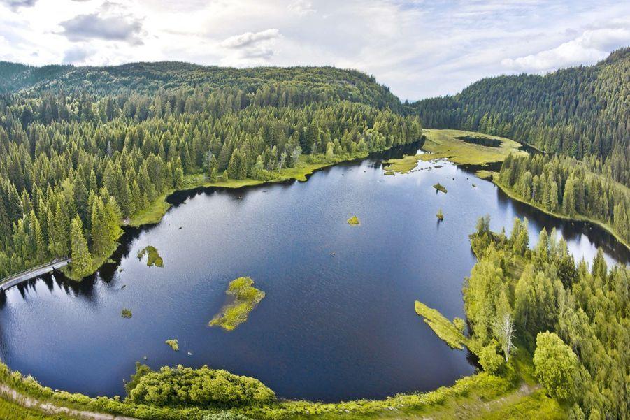 DANS LES VOSGES, UN COIN DE CANADA Surmonté d'une forêt de conifères, le lac de Lispach a fait son lit dans une cuvette glaciaire, à 900 mètres d'altitude. Cette tourbière lacustre est un écosystème fragile, précieux refuge pour de nombreuses espèces protégées.