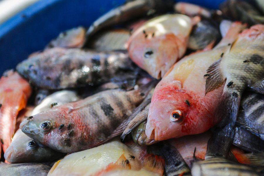 Les pêcheurs locaux auNicaraguan'en peuvent plus de la pollution présente dans le lacManagua.