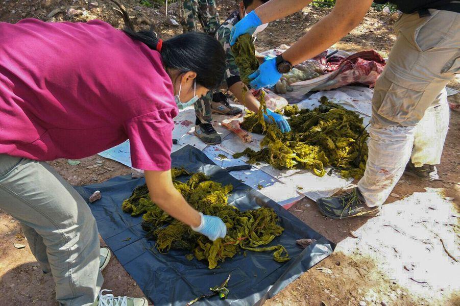 Le cadavre du cerf, âgé de dix ans, a été découvert dans un parc national de la province de Nan à quelque 630 km au nord de Bangkok, selon les autorités. Son estomac contenait 7 kilos de plastique.