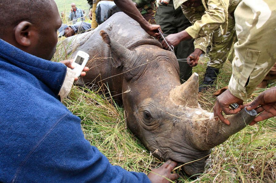 2,4 tonnes d'ivoire ont été brulées au Mozambique.