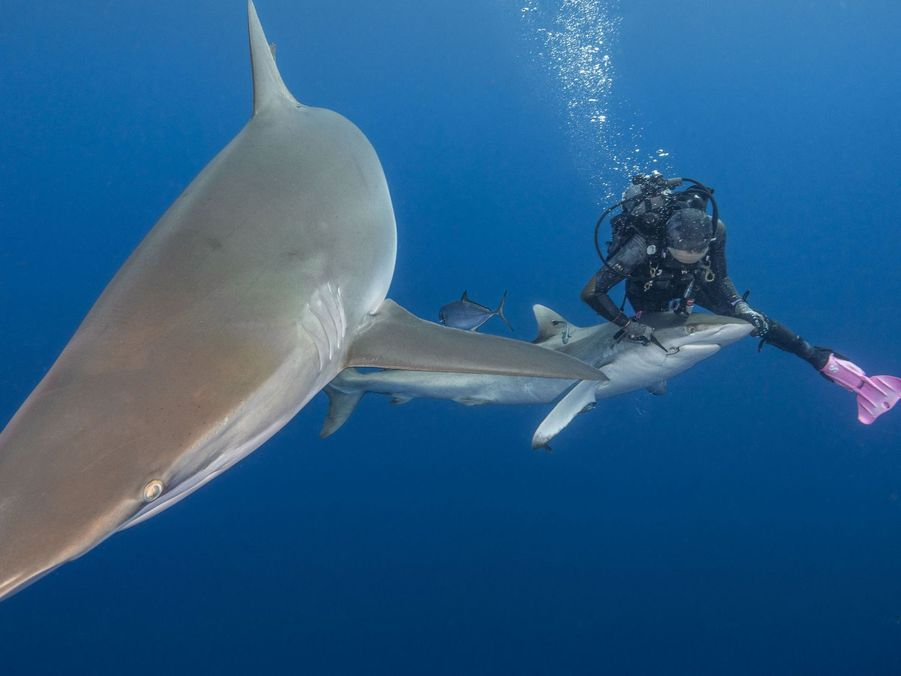 Terri Olah a retiré un hameçon de la gueule d'un requin, au large de la Floride.