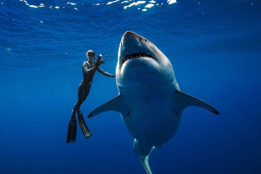 Ocean Ramsey et une femelle grand requin blanc près d'Hawaï, en janvier 2019.