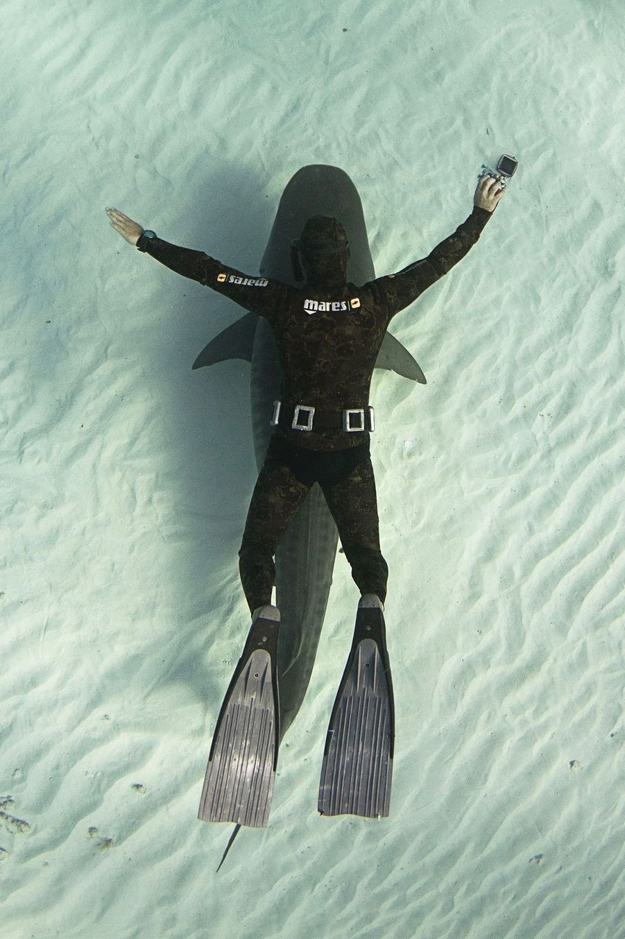 En 2014, Ocean Ramsey avait fait une superbe plongée avec un groupe de squales.