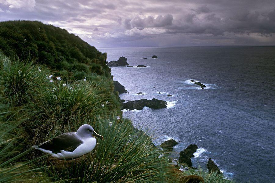 Le Chili et l'île de Niue ont décrété la protection de 750 000 km2 d'aires marines protégées.