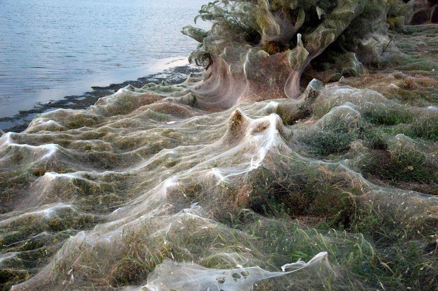 Les araignées ont formé une toile de près de 300 mètres de long àAitoliko (Grèce).