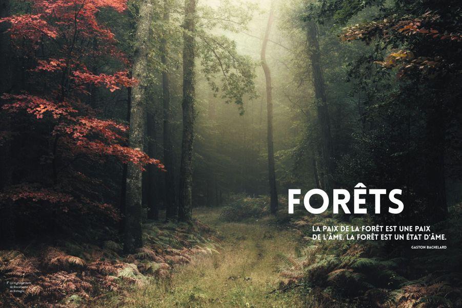 La mythique forêt de Brocéliande, en Bretagne.