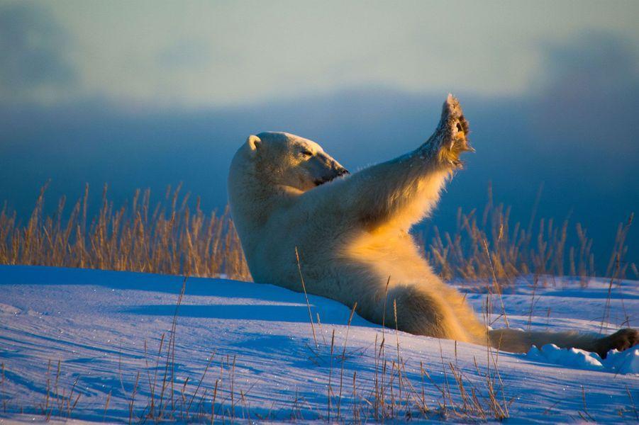 Un ours se cache du soleil.