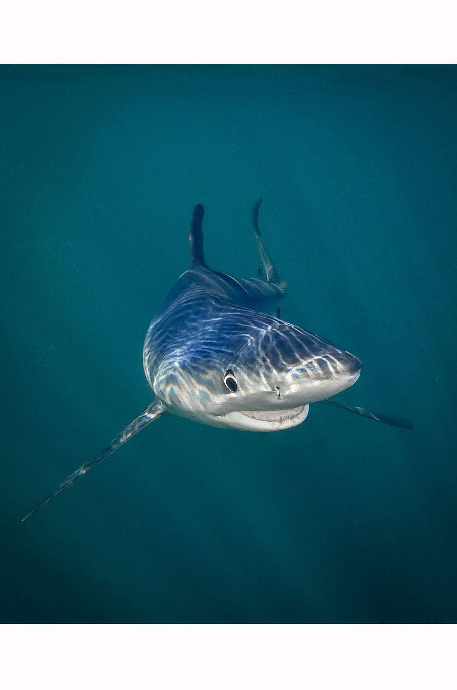 Un requin au sourire démoniaque.