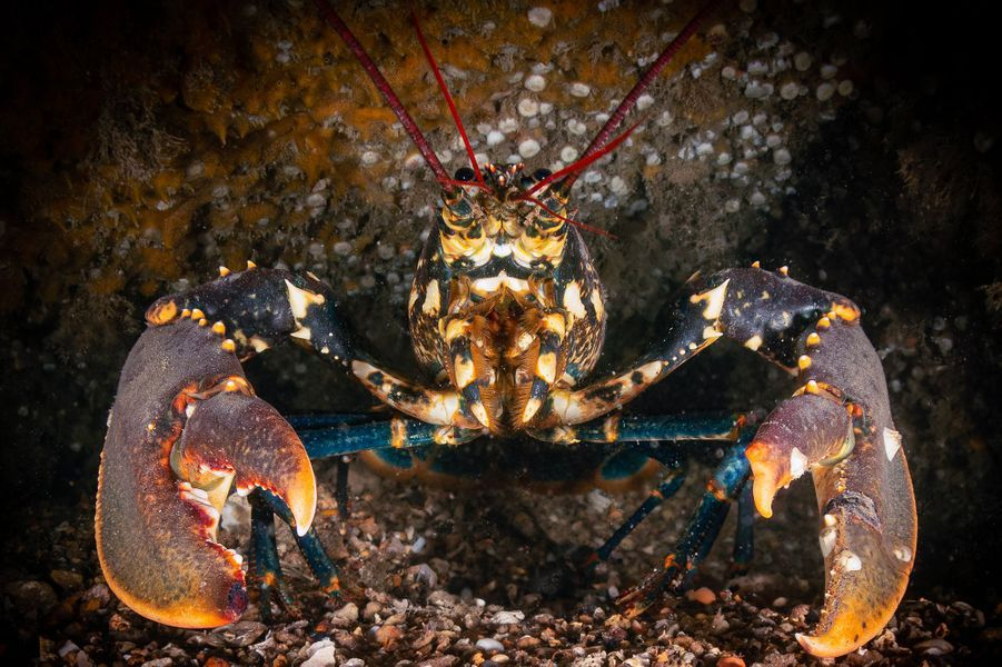 """""""All in good claws!"""" de Martin Edser,Sussex, Angleterre."""