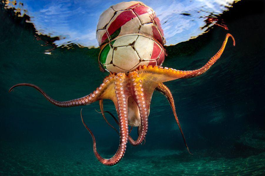 """""""Octopus Training"""" de Pasquale Vassallo,Mer Tyrrhénienne, Italie. VAINQUEUR CATEGORIE COMPORTEMENT."""