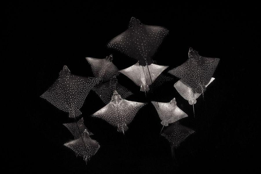 """Constellation of Eagle Rays"" deHenley Spiers,COMO Cocoa, South Malé Atoll, Maldives."
