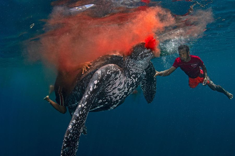 """Tradition kills"" de Scott Gutsy Tuason,Kei Archipelago , Indonésie."
