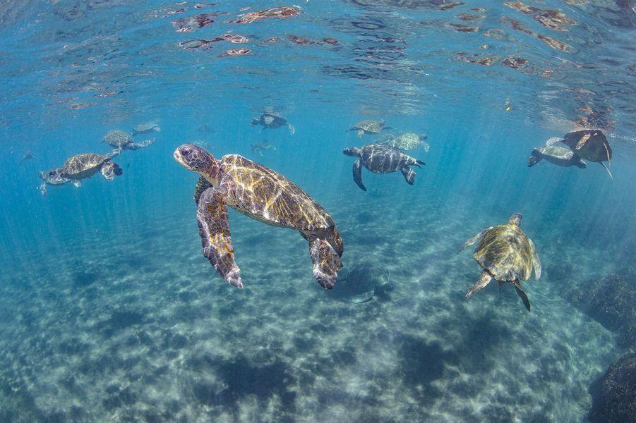 """Turtle Haven"" de Theresa Guise,Punta Vincente Roca, Isabela Island, Galapagos."