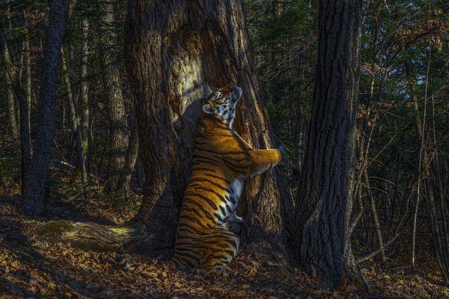 L'étreinte © Sergey Gorshkov Wildlife Photographer of the Year 2020