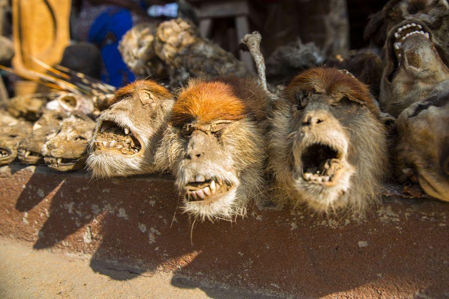 Des têtes de singes en vente dans le marché de Lomé