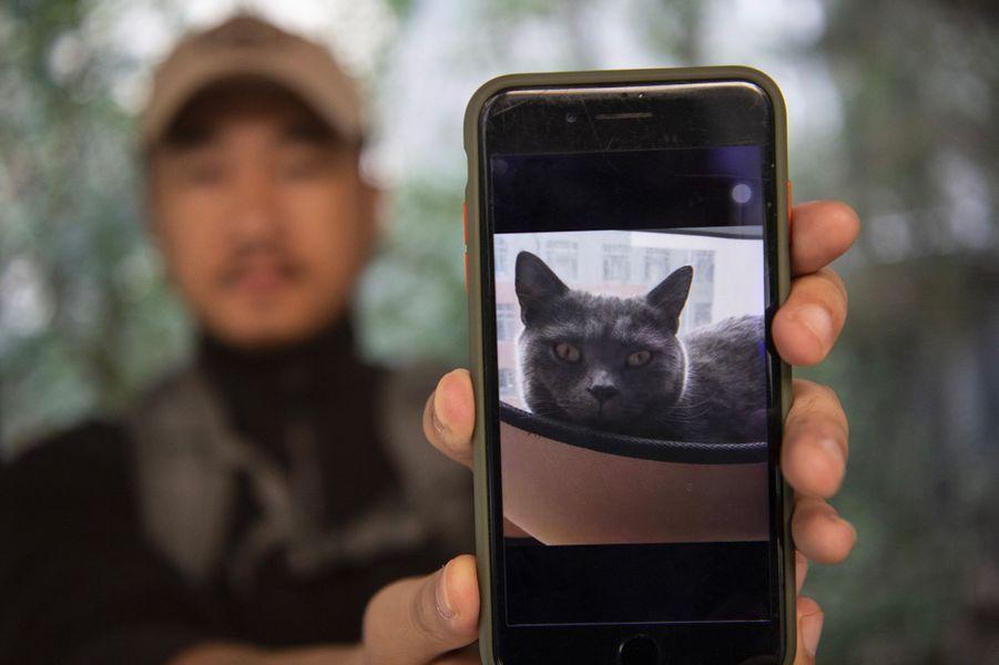 Un chat porté disparu.