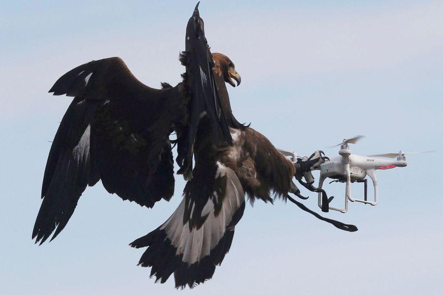Photo prise sur la base 118 de Mont-de-Marsan lors d'un exercice. Pour habituer les aigles, de la nourriture est placée dans les drones.