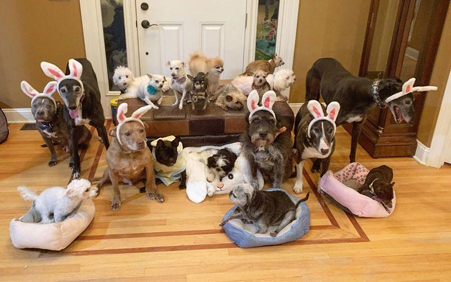 Les chiens vivent dans une maison refuge.