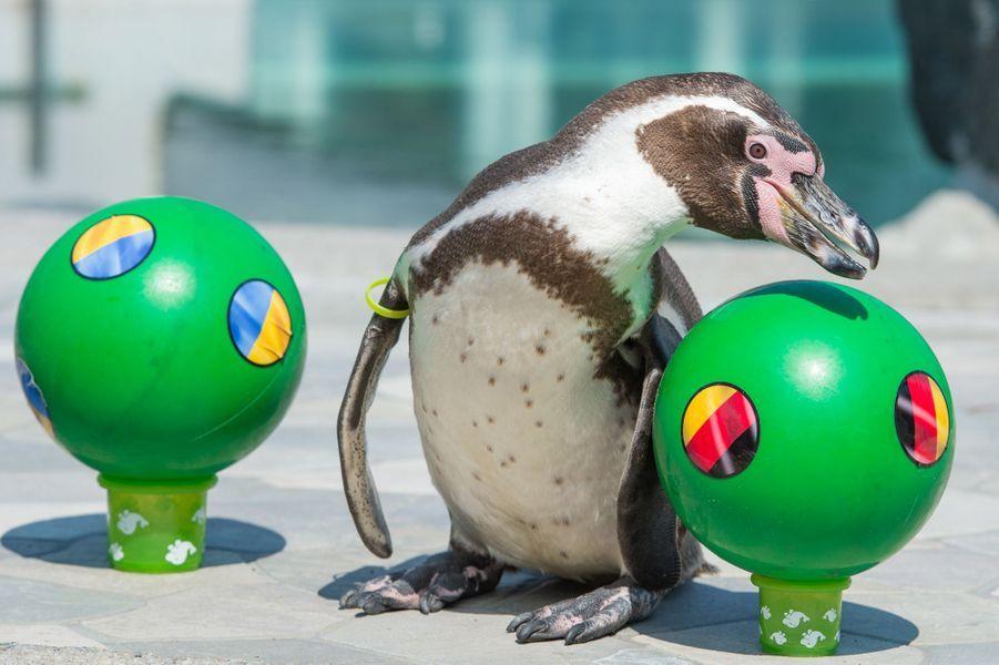 Flocke le pingouin (Euro 2016)
