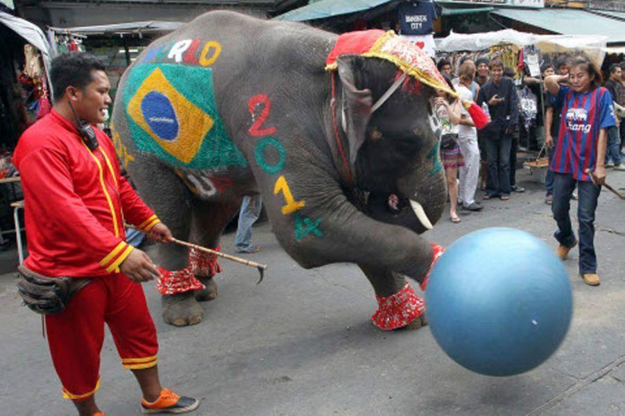 L'éléphant thaïlandais (Coupe du Monde 2014)