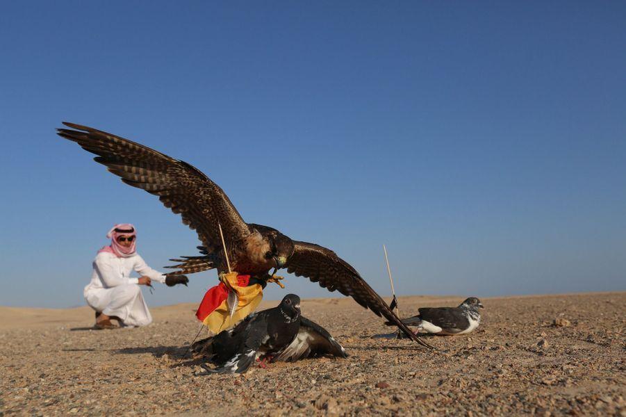 Le faucon d'Arabie Saoudite (Coupe du Monde 2014)