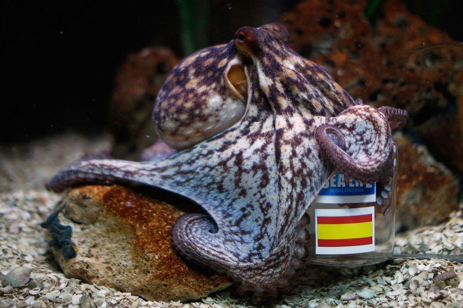 Manolo, le poulpe espagnol (Coupe du Monde 2014)