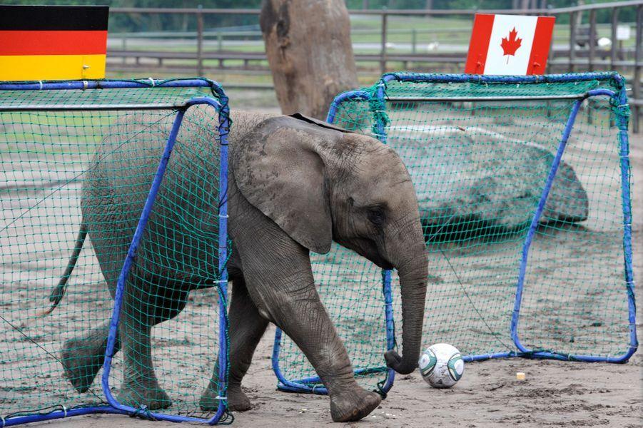 Nelly l'éléphant (Coupe du Monde 2014)