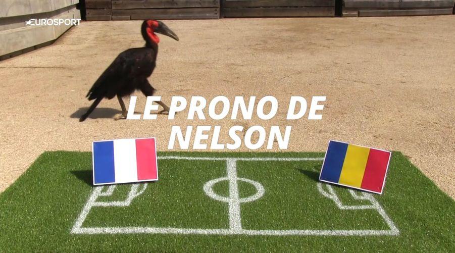 Nelson le Calao d'Eurosport, pour l'Euro 2016.