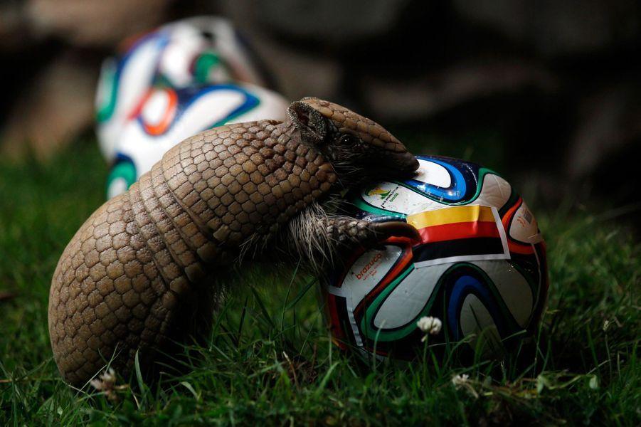 Norman le tatou (Coupe du Monde 2014)