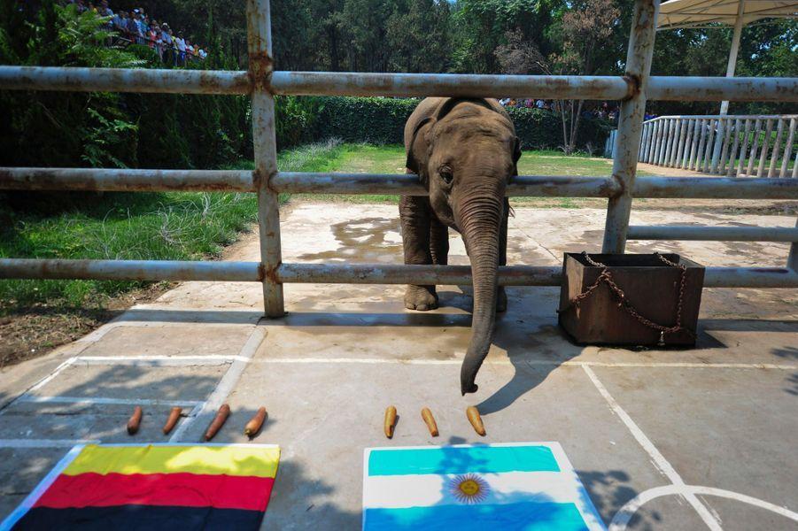 Yalu, l'éléphant chinois (Coupe du Monde 2014)