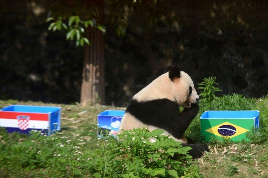 Ying Mei, la panda chinois (Coupe du Monde 2014)