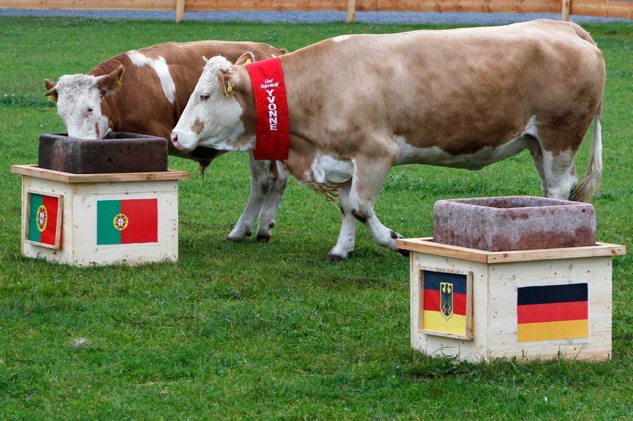 Yvonne, la vache allemande (Euro 2012)