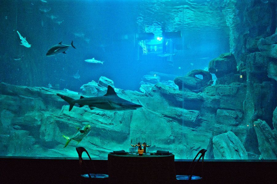 Le diner devant l'aquarium des requins