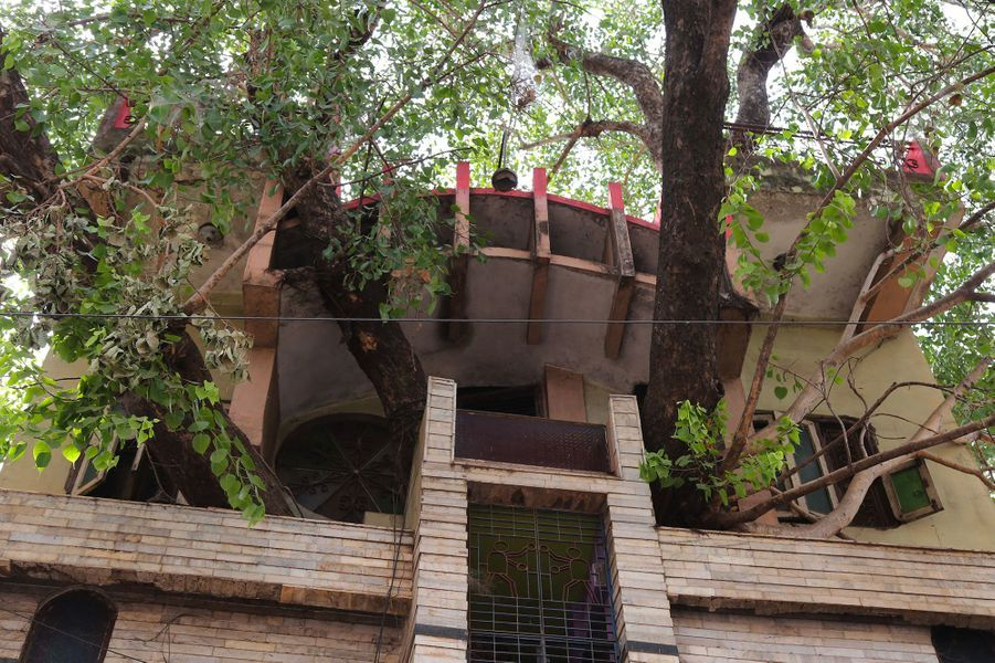 """Le figuier, appelé """"pipal"""" en hindi, est considéré comme sacré enInde. En couper un est perçu comme de mauvais augure. Alors, une famille a décidé d'agrandir sa résidence de trois étages de la ville de Jabalpur autour d'un arbre."""