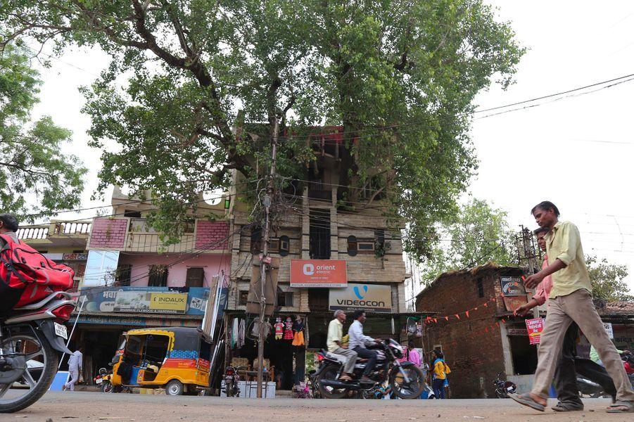 """Le figuier, appelé """"pipal"""" en hindi, est considéré comme sacré enInde. En couper un est perçu comme de mauvais augure. Alors, une famille a décidé d'agrandir sarésidence de trois étages de la ville de Jabalpur autour d'un arbre."""