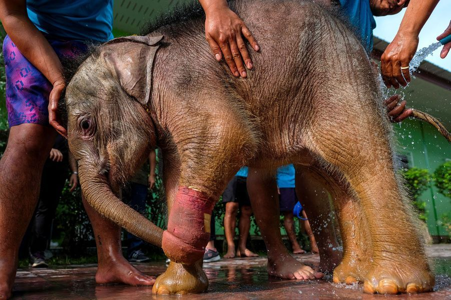 L'éléphanteau Fah jam