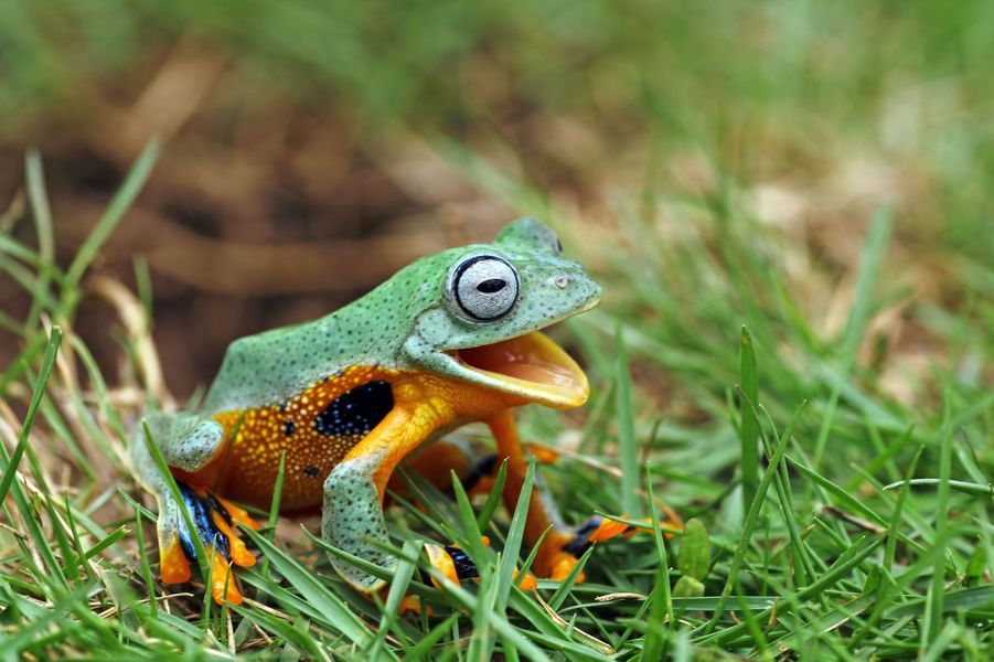 Une série de photos a immortalisé la «joie» d'une grenouille hydratée par son propriétaire après une échappée belle.